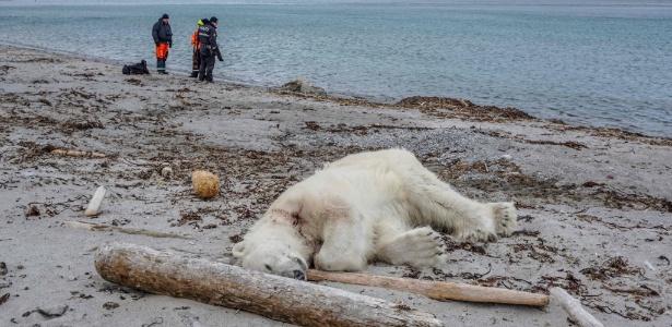 Animal foi abatido após atacar membro da tripulação que inspecionava local para passeio de turistas - AFP/ NTB Scanpix/Gustav Busch Arntsen