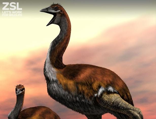 Por 60 milhões de anos, o colossal pássaro-elefante - Aepyornis  maximus -, que não voava, habitou a savana e as florestas tropicais de Madagascar, até ser extinto, no século XVII - Jaime Chirinos/ Zoological Society of London