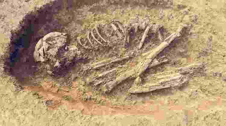 Fósseis podem trazer mais revelações do que você imagina - Getty Images - Getty Images