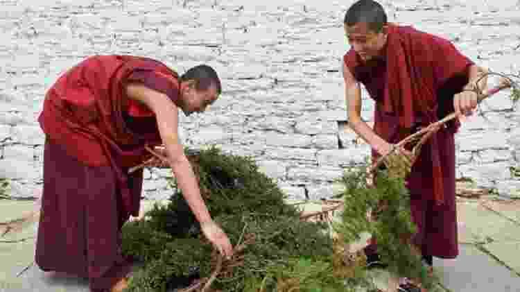 Os monges separam ramos de zimbro para preparar a fórmula secreta de Nado - Simon Urwin - Simon Urwin