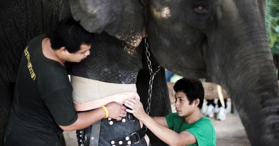 30.jun.2016 - A elefante Mosha tinha apenas sete meses quando sofreu o mesmo acidente que Motola, há dez anos. Foi levada às pressas para o hospital da fundação, mas foi apenas dois anos depois de pisar em uma mina explosiva que Mosha ganhou sua primeira prótese