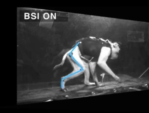 Após uma semana, macaco recuperou movimento nas pernas sem fisioterapia