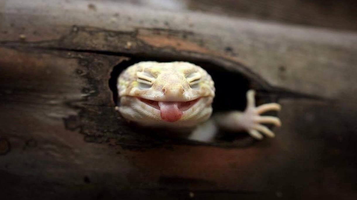 Essa foto de uma espécie de lagarto