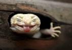 Sorriso de sapo, língua de lagarto: as expressões de pequenos animais - Muhhamad Roem/BBC