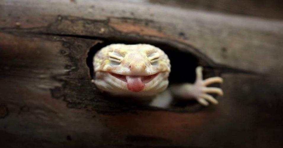 """Essa foto de uma espécie de lagarto """"sorrindo"""" é a preferida de Muhammad Roem, um fotógrafo amador de apenas 28 anos conseguiu captar ângulos inusitados de répteis, anfíbios e outros animais na Indonésia"""