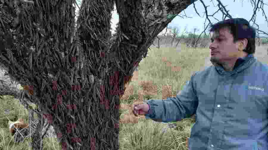 Nuvem de gafanhotos foi encontrada na Argentina em trecho cujo acesso só foi possível a cavalo - Divulgação/Senasa - Serviço Nacional de Sanidade e Qualidade Agroalimentar da Argentina