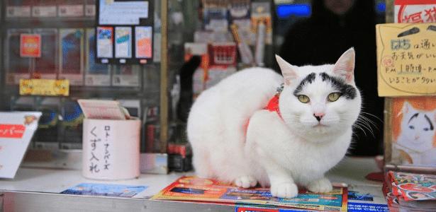 """Hachi, a gata """"que dá sorte"""", em Tóquio"""