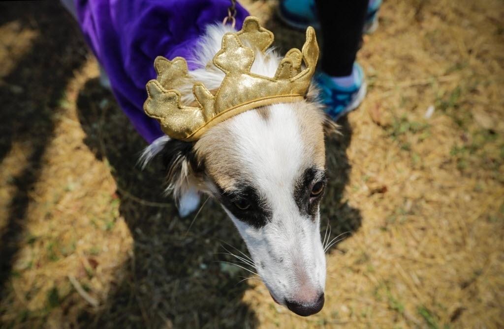 15.abr.2016 - Cachorra vestida de princesa é levada em manifestação contra abusos de animais realizada em frente ao Parlamento de Manágua, na Nicarágua. Os manifestantes pedem o fim de brigas de galo, touradas e uso de animais em circos em todo o país