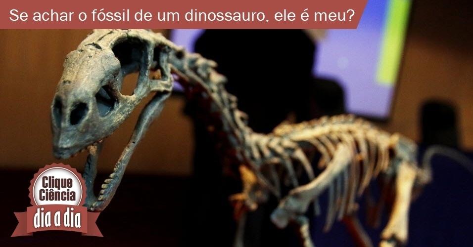 Se eu achar o fóssil de um dinossauro, ele é meu?