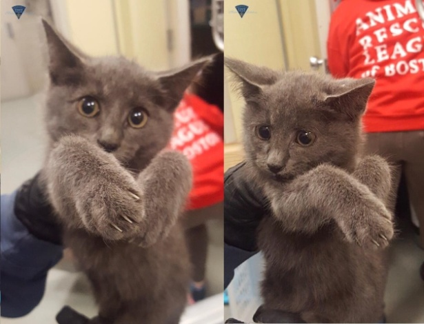 O gatinho que parou a rodovia foi levado para uma ONG de resgate de animais