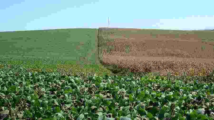 Área de cultivo de soja (à esquerda) e milho em Cruz Alta (RS) - Staff Photographer