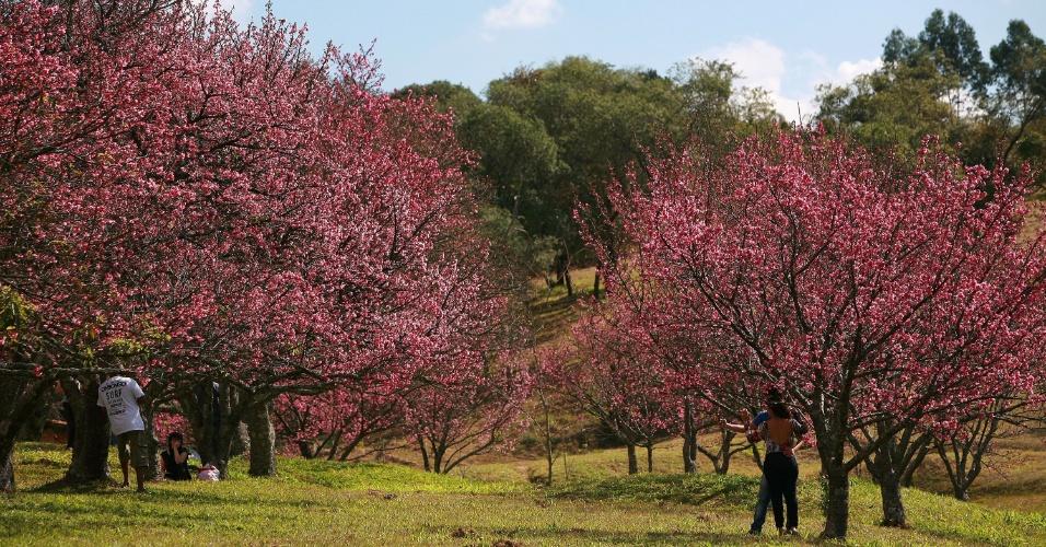 """2.jul.2016 - Comunidade nipo-brasileira comemora a 20ª edição do """"Sakura Matsuri"""", Festival das Cerejeiras, na cidade de São Roque (SP)"""