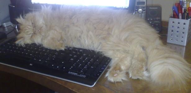 Billy se ajeita entre o monitor e o teclado do computador na escrivaninha - Arquivo pessoal