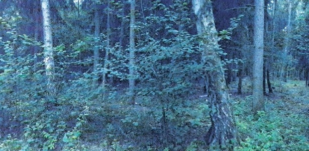 Luz misteriosa aparece de noite na floresta da região de Brieselang há mais de 30 anos