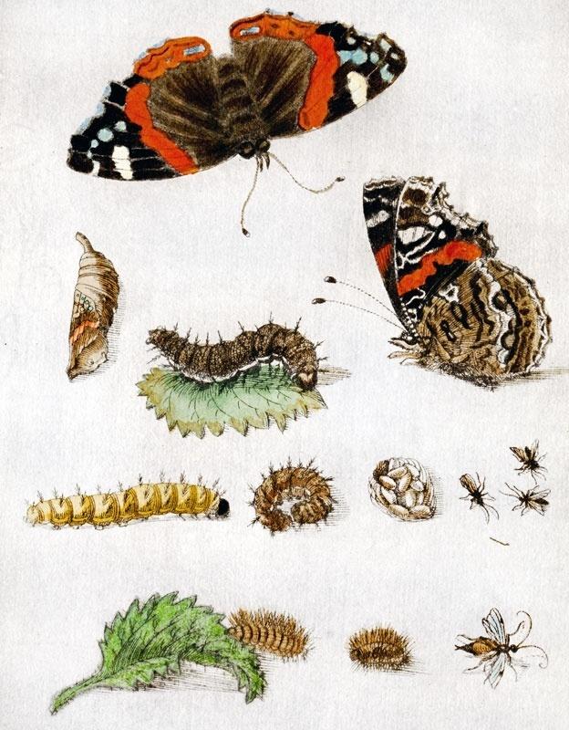 Metamorfose: ovos, lagartas, casulos e, finalmente, borboletas