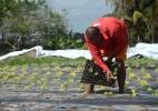 Chuvas no semiárido apontam fim de ciclo de secas e melhora na agricultura (Foto: Beto Macário/UOL)