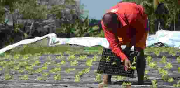 Pequenos produtores rurais retomam o cultivo de alimentos após cinco anos de seca - Beto Macário/UOL