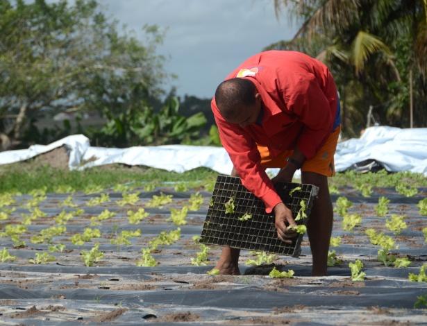 Pequenos produtores rurais retomam o cultivo de alimentos após cinco anos de seca