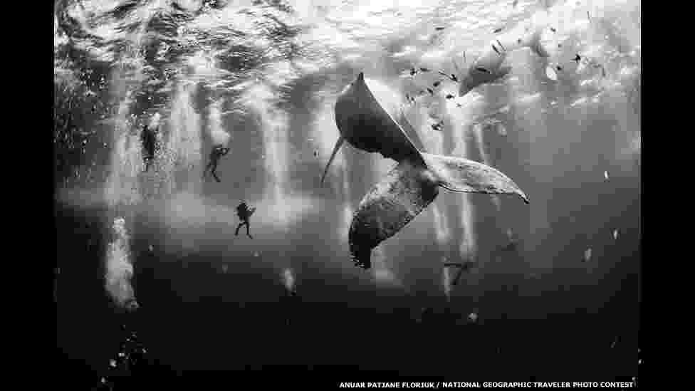 4.ago.2015 - Uma foto de mergulhadores nadando com uma baleia-jubarte e seu filhote ganhou o grande prêmio do concurso de fotos de viagem da National Geographic. A foto vencedora, de Anuar Patjane Floriuk, foi tirada perto de Roca Partida, uma ilha na costa oeste do México, e superou mais de 17 mil inscritas - Anuar Patjane Floriuk/National Geographic Phototraveler Contest