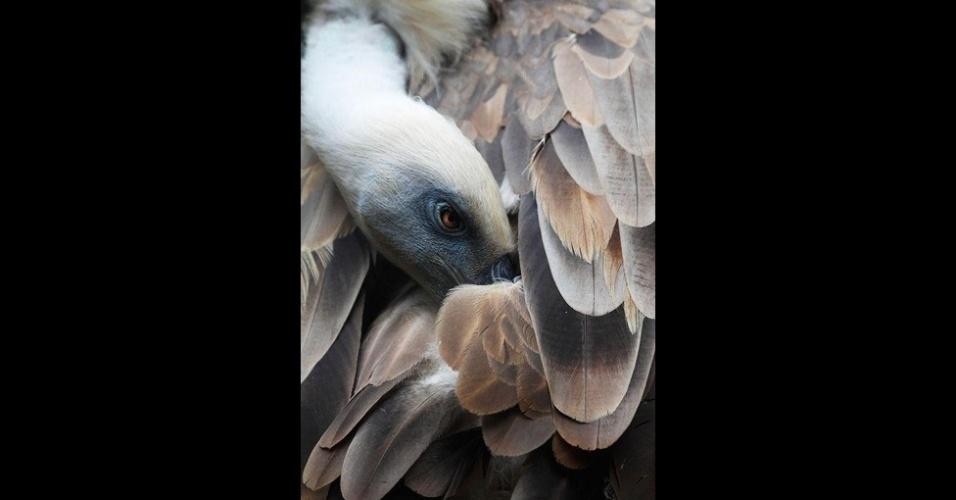 7.out.2015 - O concurso National Geographic Photo de 2015 está chegando ao fim e aqui estão algumas das fotos mais bonitas que concorrem ao prêmio. Essa é do abutre-fouveiro, conhecido como grifo, que foi tirada por Andres Lopez