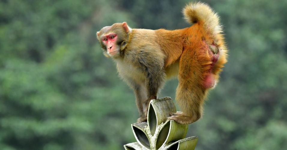 5.dez.2016 - Macaco trepa no topo de uma construção na Villa Shiziguan, condado de Xuan'en, na província de Hubei na China