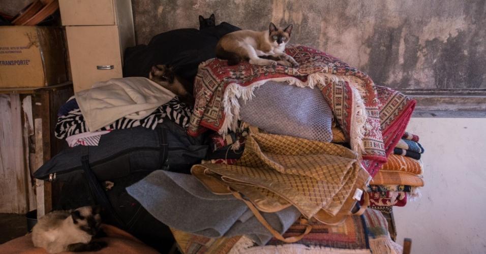 Os gatos ficam em uma parte separada dos cães --mas convivem em harmonia, segundo a comerciante