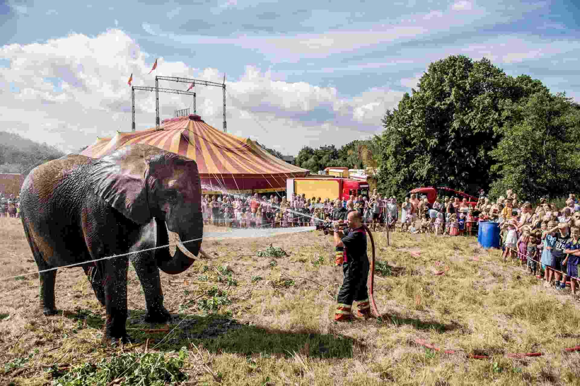 2.ago.2018 - Bombeiro refresca elefante na Dinamarca - Ritzau Scanpix / Mads Claus Rasmussen / AFP
