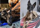 ONG trabalha 9 horas para salvar cadela coberta por piche em Buenos Aires (Foto: Divulgação/ONG Proyecto 4 Patas)