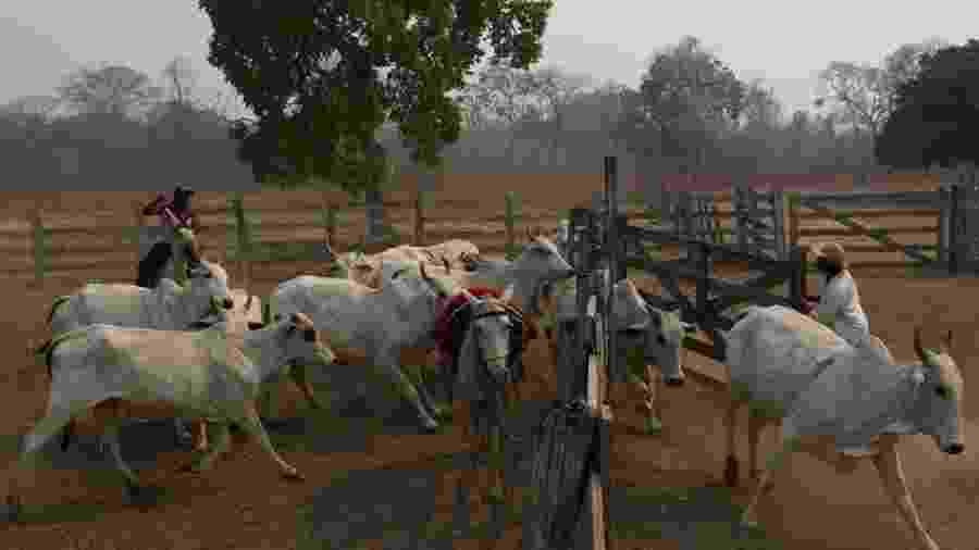 Criação extensiva de gado não ajuda a combater incêndios - Reuters