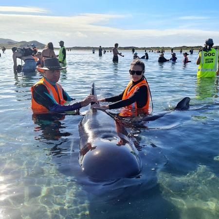22.fev.2021 -Equipes de resgate conseguiram liberar hoje 28baleias-piloto que estavam encalhadas em uma faixa do litoral da Ilha Sul da Nova Zelândia - AFP Photo/Project Jonah