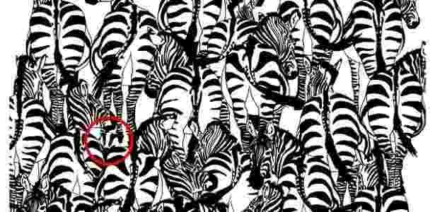 desafio zebra_resultado - Reprodução/BBC Terra - Reprodução/BBC Terra