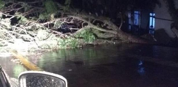Uma árvore caiu por causa do temporal que atingiu a cidade de Santa Maria