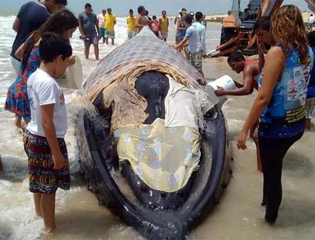 Voluntários cobriram a baleia com lençóis para proteger do sol