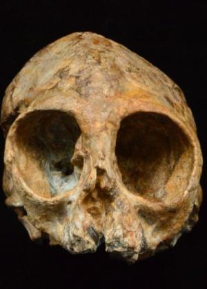 Crânio de um primata de 13 milhões de anos