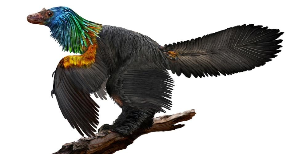 Ilustração de dinossauro semelhante a um pássaro, com penas coloridas e do tamanho de um corvo, que viveu no nordeste da China há 161 milhões de anos, durante o Período Jurássico. espécie foi nomeada Caihong, palavra em mandarim para arco-íris