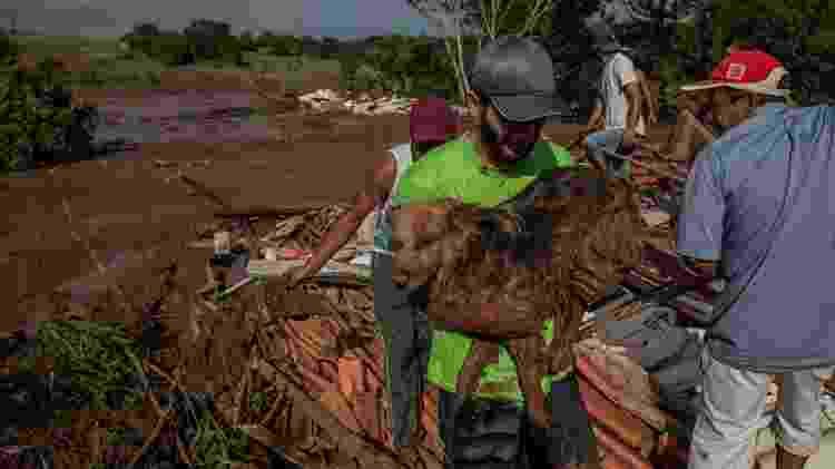 Moradores resgatam cachorro após lama invadir casas em Brumadinho (MG) - Eduardo Anizelli/ Folhapress - Eduardo Anizelli/ Folhapress