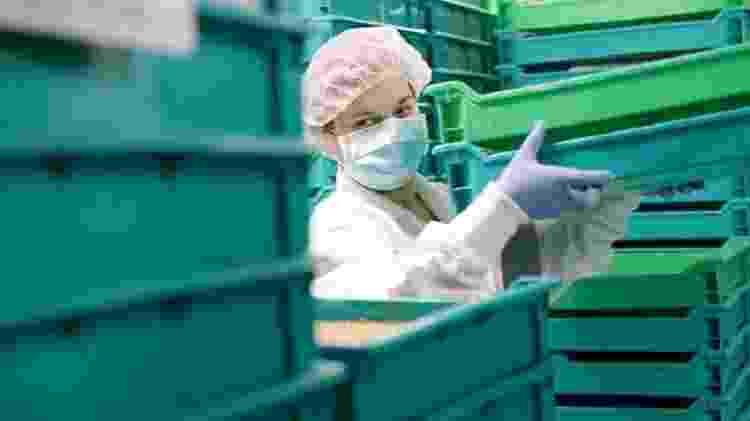 Nas instalações de sua empresa, Virginia Emery cria milhares de larvas para serem usadas na alimentação de animais - Getty Images - Getty Images