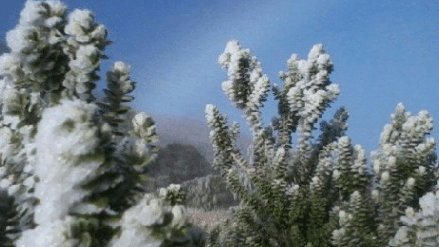 Foto tirada no dia 24 de junho mostra a vegetação do Parque Nacional do Itatiaia coberta de gelo - Divulgação/Parque Nacional do Itatiaia