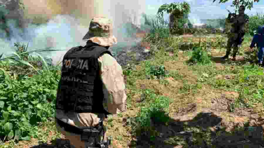 Operação Facheiro também apreendeu 90kg da droga  - Divulgação/Polícia Federal