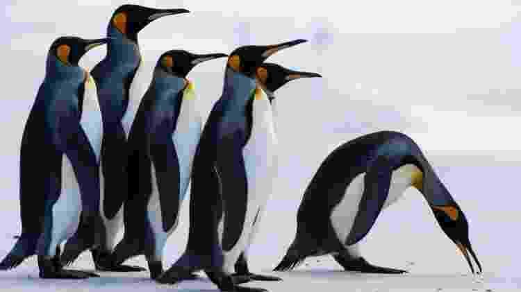 Pinguins - AFP - AFP