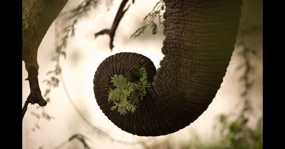 """4.jan.2016 - A categoria """"Wildlife Insight"""" (vida selvagem) premiou Naomi Stolow por essa imagem da tromba de um elefante feita na África do Sul"""