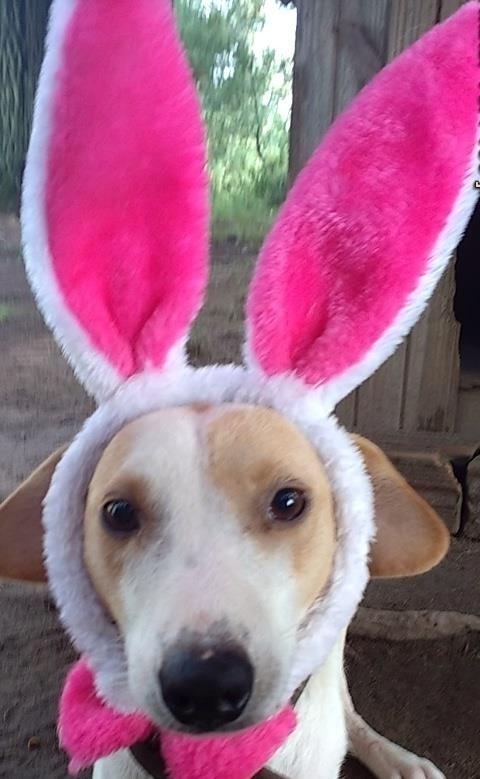 Não dá vontade de apertar a Mãezinha? O canil que transformou cachorros em coelhos está situado em uma cidade gaúcha de quase 19 mil habitantes