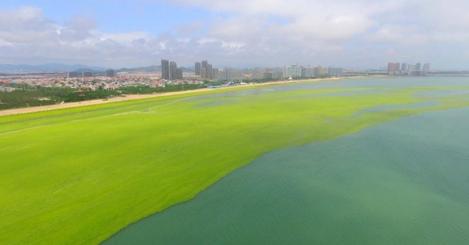 8.jul.2016 - Algas verdes tomam conta da costa da cidade de Haiyang de Yantai, na China. O aumento da alga, do tipo Enteromorpha prolifera, pode estar relacionado com a poluição da agricultura e da indústria. Trabalhos de limpeza das águas já estão em curso