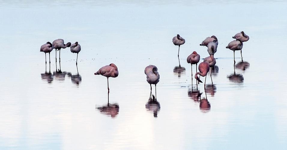 17.ago.2016 - Um grupo de flamingos-pequenos dormindo no Parque Nacional do Serengeti, na Tanzânia. Com equilíbrio impecável, flamingos gostam de descansar sobre uma perna, mas os cientistas não sabem ainda a razão. Pode ser para conservar calor, ou simplesmente por ser mais confortável