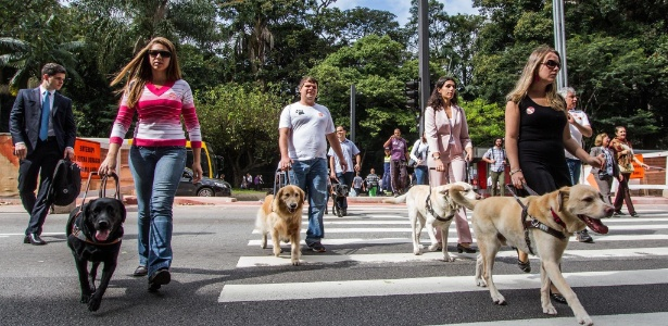 Projeto Iris desenvolve projetos para acelerar a inclusão de deficientes visuais, como a difusão do uso de cães-guia  - Divulgação