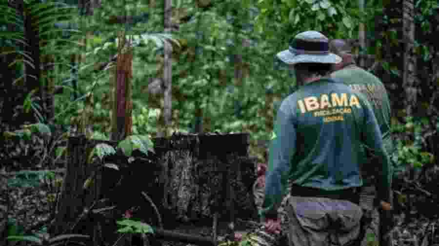Maioria dos processos do Ibama está relacionados a danos à flora - Felipe Werneck/Ibama