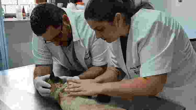 Gato foi levado a uma clínica veterinária, mas não resistiu aos ferimentos - Divulgação