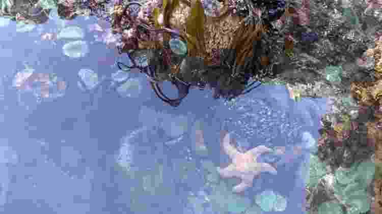 As poças de maré estavam cheias de vida e de estrelas do mar - Passion Pictures