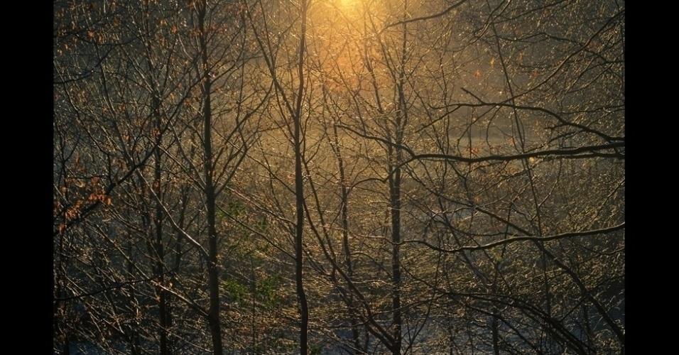 """4.jan.2016 - Mais de 12 mil imagens competiram nas oito categorias do prêmio Outdoor Photographer of the Year (Fotógrafo de Exterior do Ano) de 2015, dedicado a fotos feitas ao ar livre. Ben Wayman venceu na categoria """"Light of the Land"""" (luz da terra) por essa imagem de árvores na margem de um rio em Allen Banks, perto de Haydon Bridge, em Northumberland"""