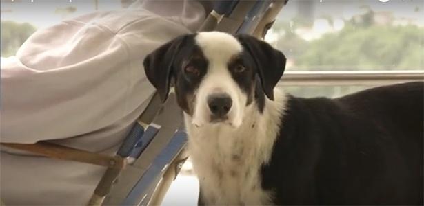 Pirata, o cachorro que há três meses espera o dono no hospital onde este faleceu